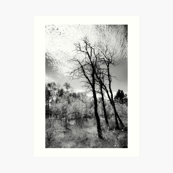 Moody sky and trees on the road to Kentucky Alleyne Provincial Park Art Print