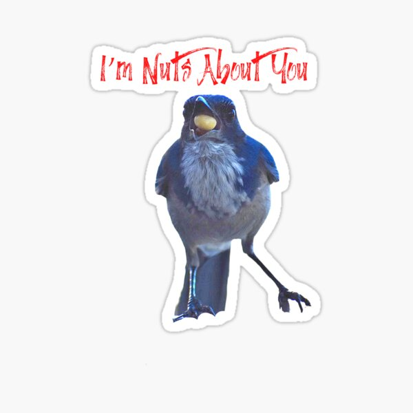 Blue Jay And Nut I'm Nuts About You In Nature With Concetta Ellis Sticker