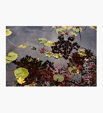 Fall Pond Reflections - a Story of Waterlilies and Japanese Maple Trees - Take Two Photographic Print