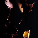 Autumn by emilieroy