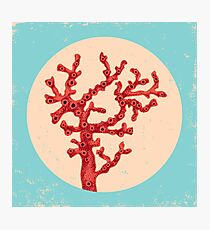 Red coral Photographic Print