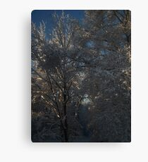 Snow Covered Morning #6669 Canvas Print