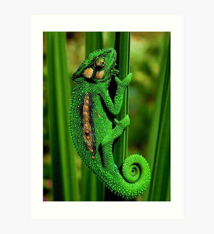 Cape Dwarf Chameleon II Art Print