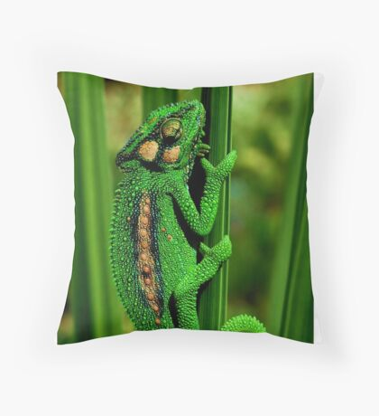 Cape Dwarf Chameleon II Throw Pillow