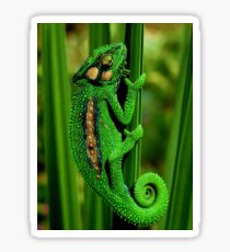 Cape Dwarf Chameleon II Sticker