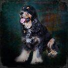 Fred the Dog by Keith G. Hawley