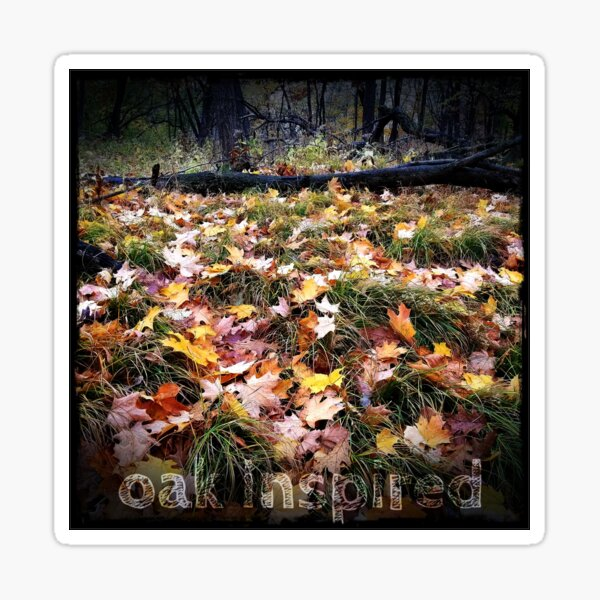 oak leaves and sedges in the midwest autumn woods Sticker