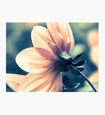 Pale Orange  Photographic Print