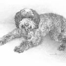 curly hair dog drawing by Mike Theuer