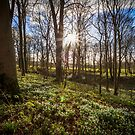 Snowdrops Sunburst by Nick Jermy