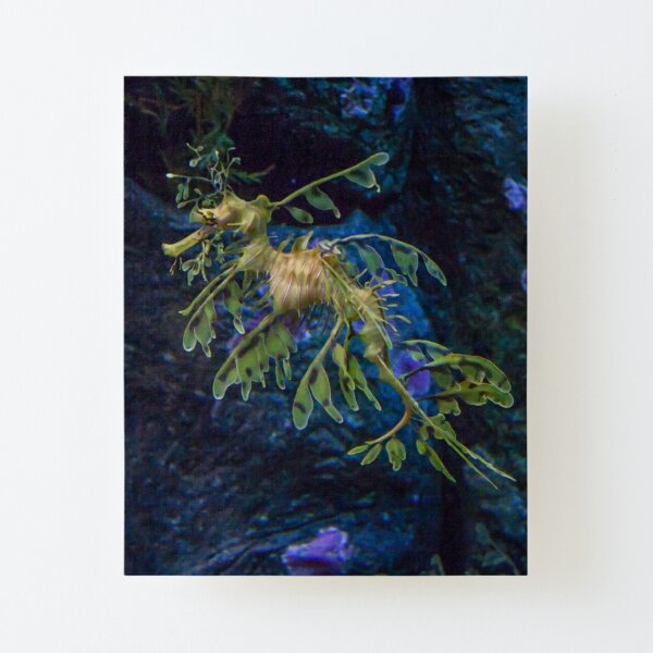 Floating beauty Canvas Mounted Print