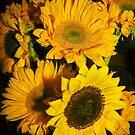 Sunflowers Pillow by Heather Friedman
