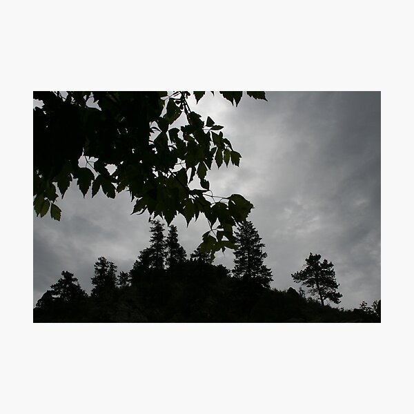Nature Knows Photographic Print