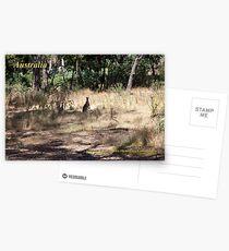 Kangaroos - Hanging Rock, Victoria Postcards