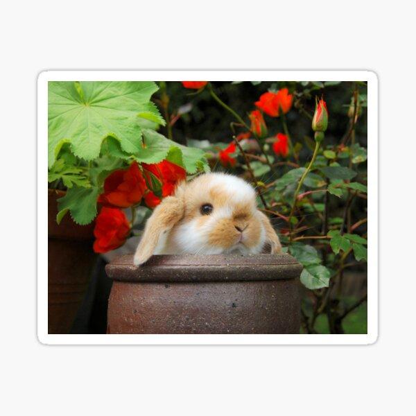 Mini Lop Rabbit Flowers Sticker