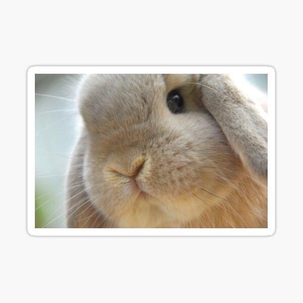Adult Mini Lop Rabbit  Sticker