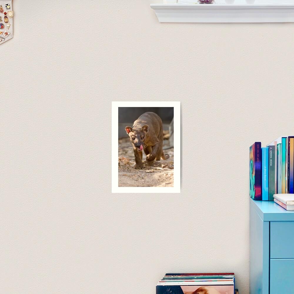 Prowling fossa Art Print