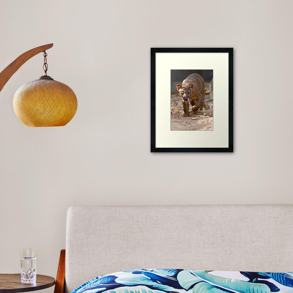 Prowling fossa Framed Art Print