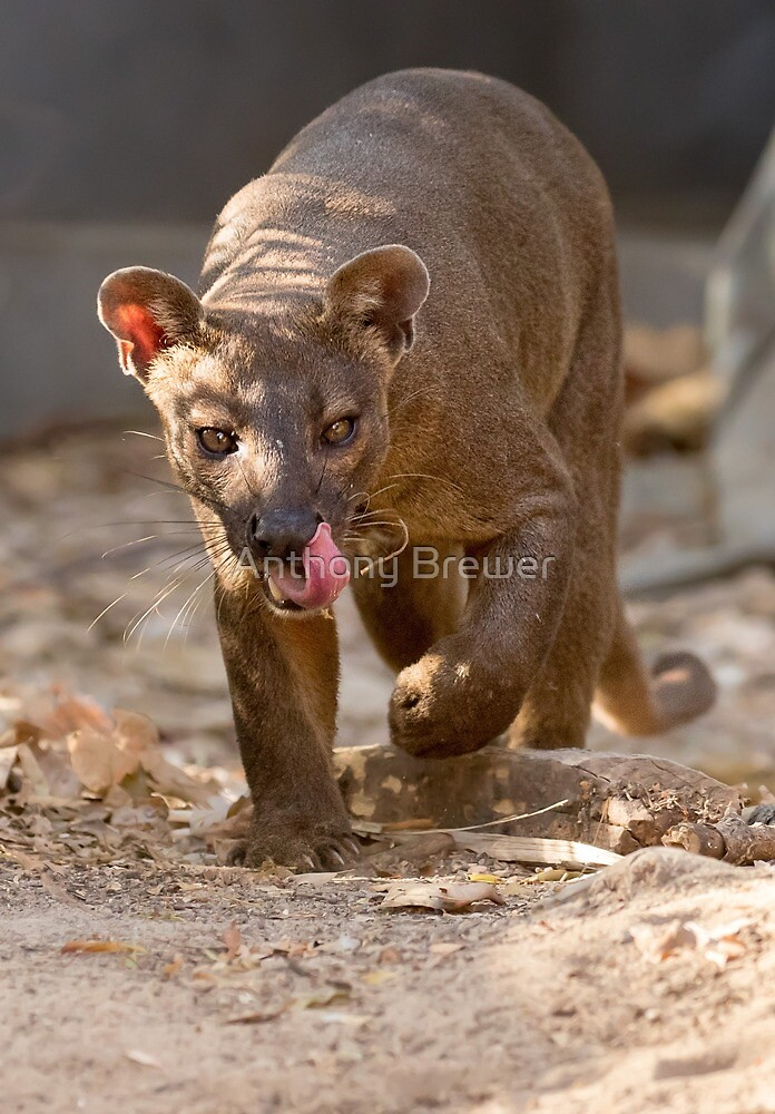 Prowling fossa by Anthony Brewer