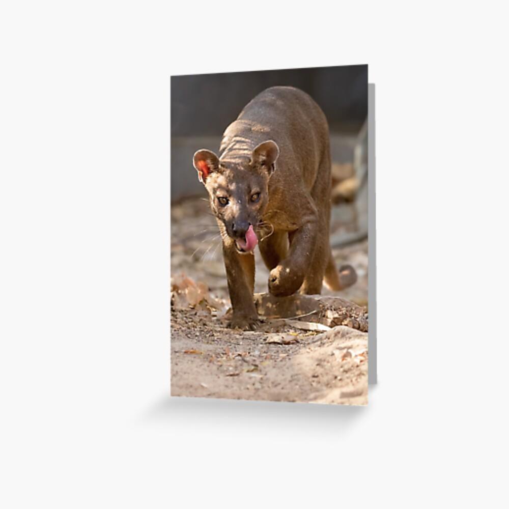 Prowling fossa Greeting Card