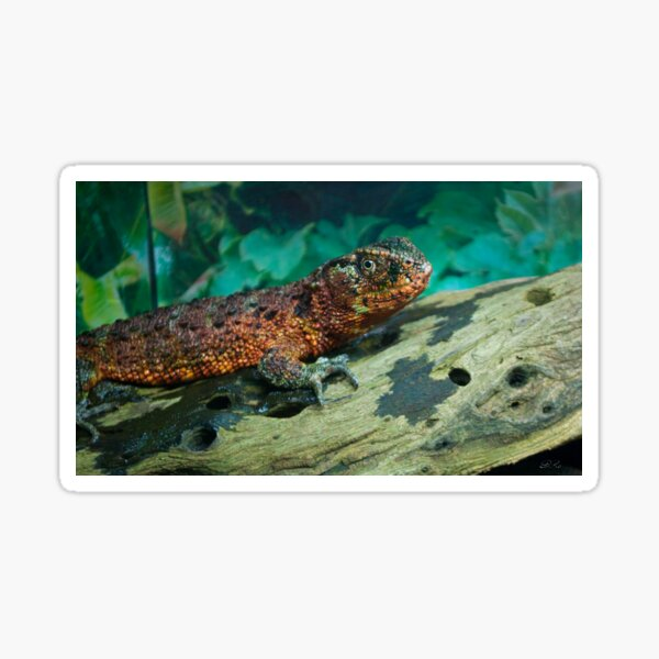 Chinese Crocodile Lizard Sticker