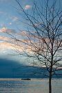 Sunset at Kaiteriteri by Werner Padarin
