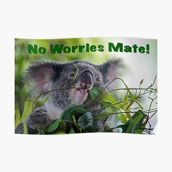 Koala No worries Poster