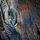 Rainbow Wood by Lea Valley Photographic