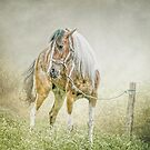 Tethered in the mist. by Brian Tarr