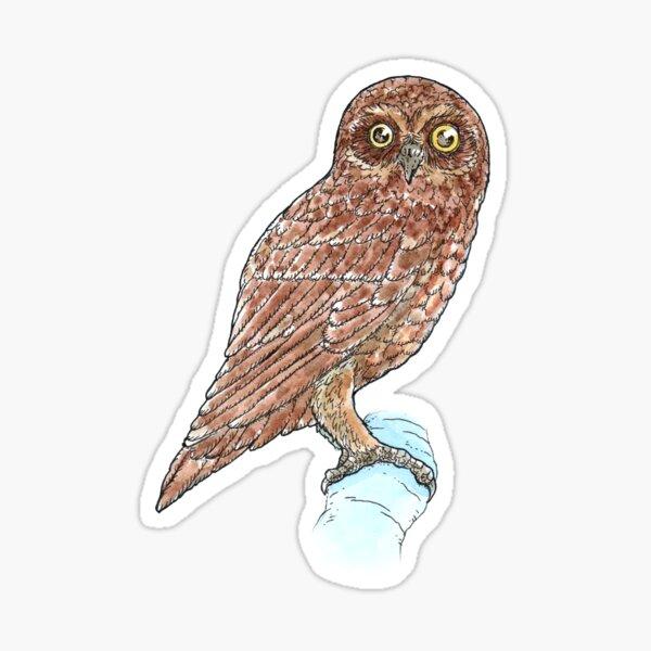 Southern Boobook Owl Sticker