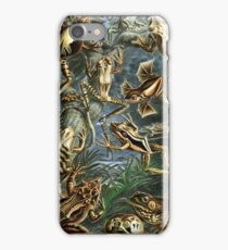 Historical painting of frogs iPhone Case/Skin