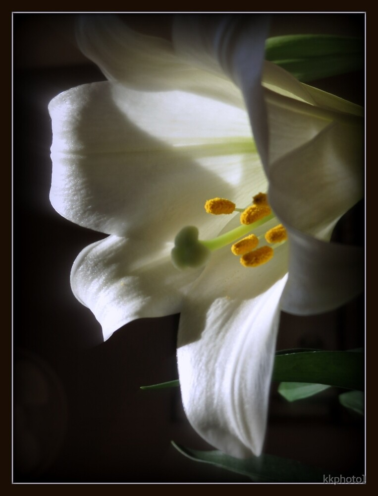 White Lily by kkphoto1