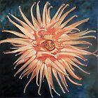 Sea Anenome Rebob by Theresa Comstock