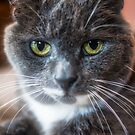 Hey There Kitty by George Davidson