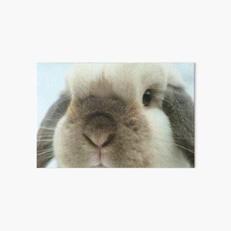 Seal Point Mini Lop Rabbit Art Board Print