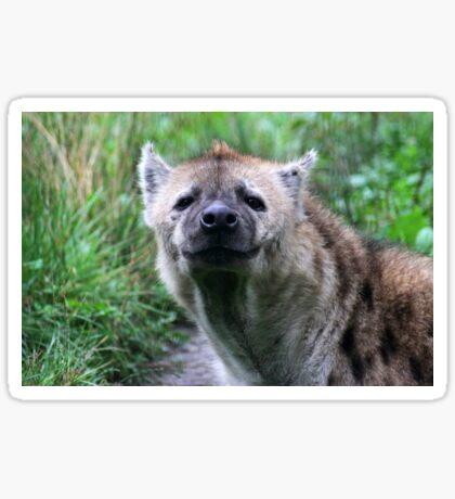 Eye to Eye Hyena Sticker