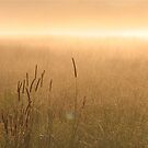 Grass in the Mist by Anthony Thomas