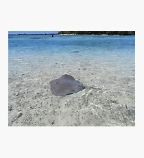 A Stingray by a small island near Moorea, French Polynesia Photographic Print