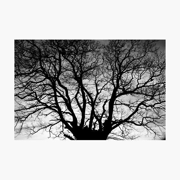 Tree Silhouette #4 Photographic Print
