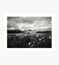 Alnwick Castle Daffodils Art Print