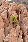 Tree and Geology by John Butler