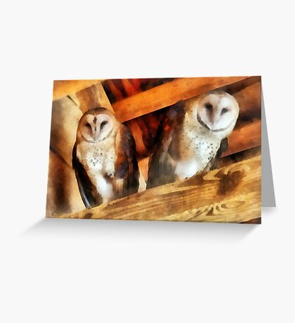 Two Barn Owls Greeting Card