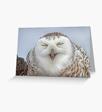 Smiling Snowy Owl Greeting Card