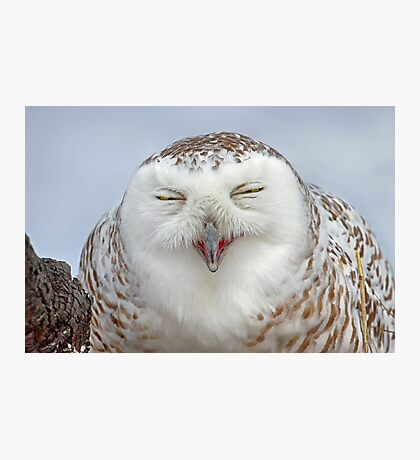 Smiling Snowy Owl Photographic Print