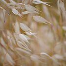Silk Grass by Diego Re