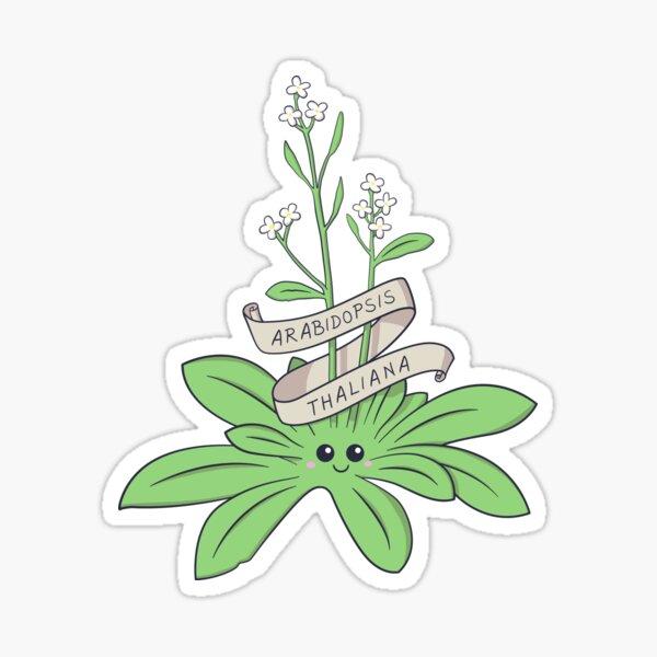 Cute Arabidopsis thaliana plant Sticker