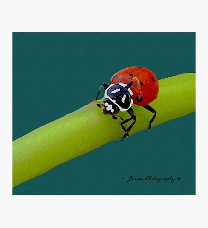 Red Hot Lady  ( Ladybug Series ) Photographic Print