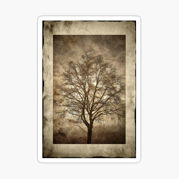 Birch Tree Sticker