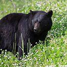 Bear in Deep Clover by Ken McElroy
