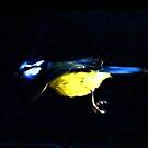 zippy blue tit by rosie320d